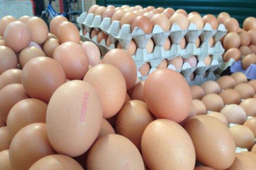 Komşu İran Bizden Yumurta Tedarik Edecek