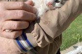 Cep telefonundan gelen kedi sesi, mahsur kalan yavru kediyi kurtarmaya yardımcı olur