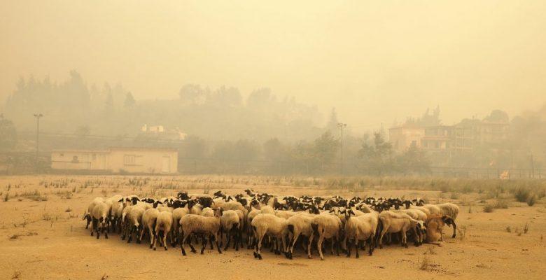 Yunanistan'da orman yangınları devam ederken turistler ve bölge sakinleri tekneyle tahliye edildi
