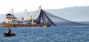 Uzmanlar, Marmara Denizi'nden yakalanan balıkların güvenle yenebileceğini söylüyor
